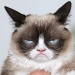 Perché condividiamo gattini su Facebook